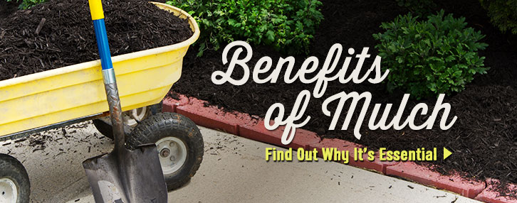 Benefits of Mulch